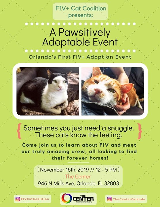 A Pawsitively Adoptable Event en Orlando le sáb 16 de noviembre de 2019 12:00-17:00 (After-Work Gay, Lesbiana)