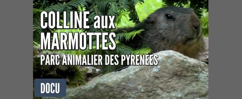 Journée à la colline aux marmottes, Argeles-Gazost