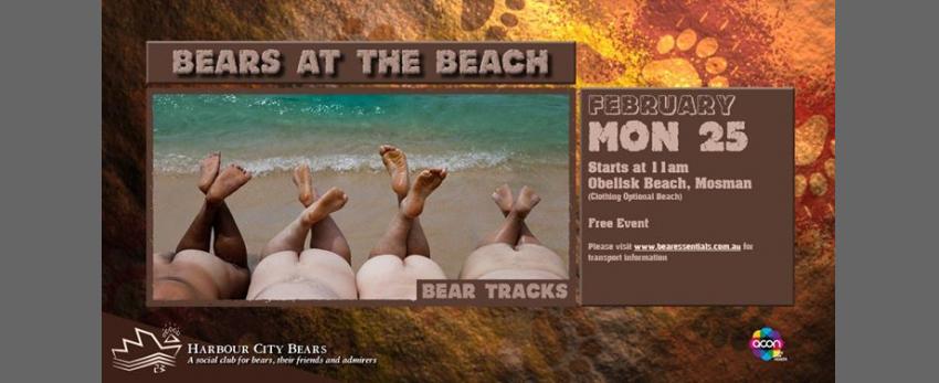 Bears at the Beach - Bear Tracks