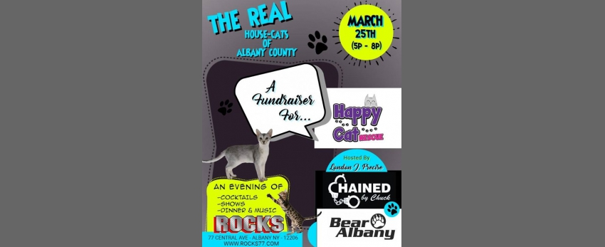 The Real House-cats of Albany! A fundraiser for Happy Cat Rescue