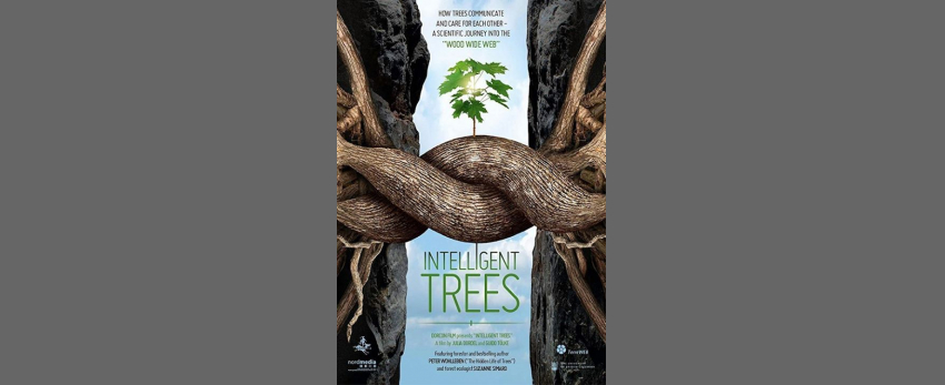 Intelligent Trees Fundraiser