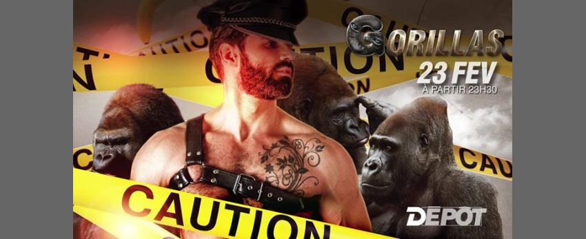 Gorillas - Caution